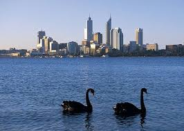 Swans from UWA